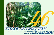 Khaolak Uniquely Little Amazon